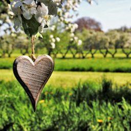 GRATITUDINE – LA RISPOSTA AI DONI SINCERI DELLA VITA