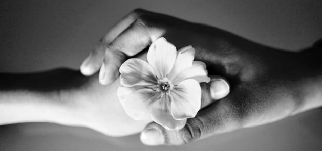 gratitudine-riconoscenza-pace-mani-stretta-fiore